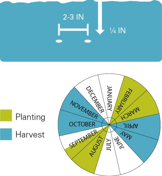 Carrots planting and harvest dates.