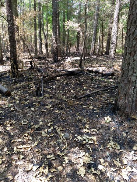 photo of a recently burned forest setting