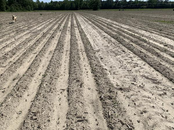 Variability in soybean emergence from crusting