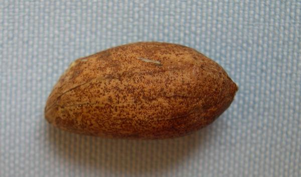 Photo of speckeled seed.