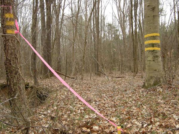 corner marker of forest property boundaries