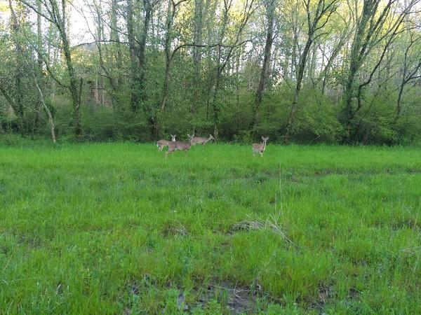 photo of distant deer group within a field near forest edge