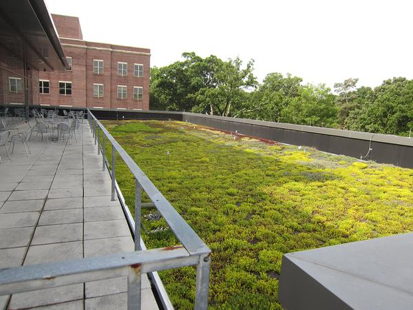 Figure 1. Extensive green roof on the FedEx Global Education Cen