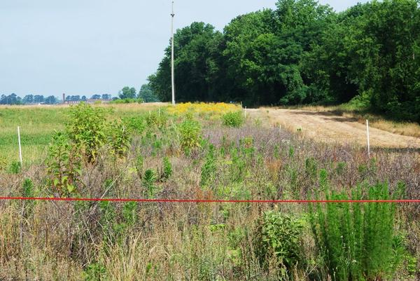 Photo of fallow crop field with abundant vegetation cover