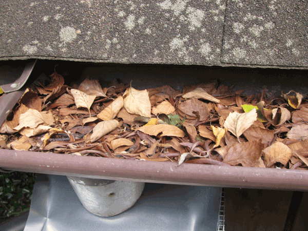 Top view of segment of gutter filled with leaves