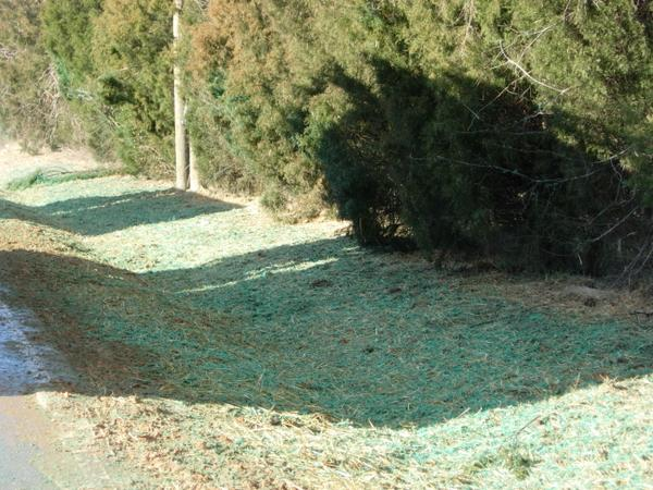 Figure 4. This hydromulch (material with green dye) was applied