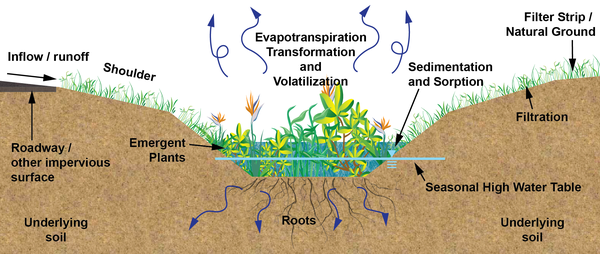 Computer graphic of soils, water and wetland plants in swale