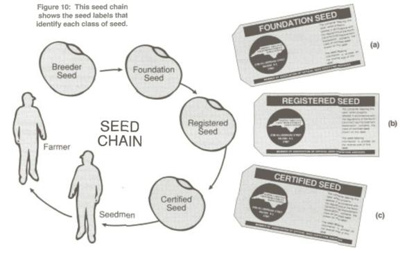 Seed and Seed Quality | NC State Extension Publications
