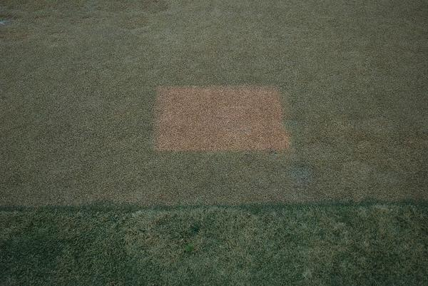 Figure 5. Exclusion square showing untreated turfgrass surface c