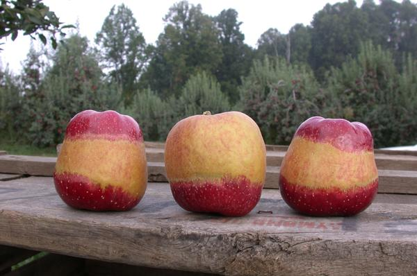 North Carolina Production Guide for Smaller Orchard