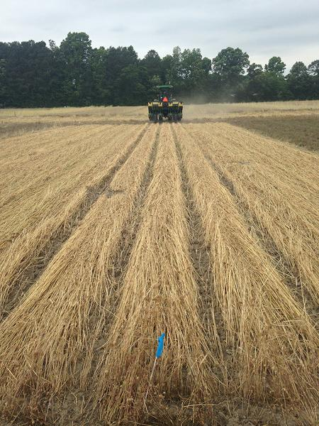 Figure 6. Planting into a cover crop mulch when the Yetter resid