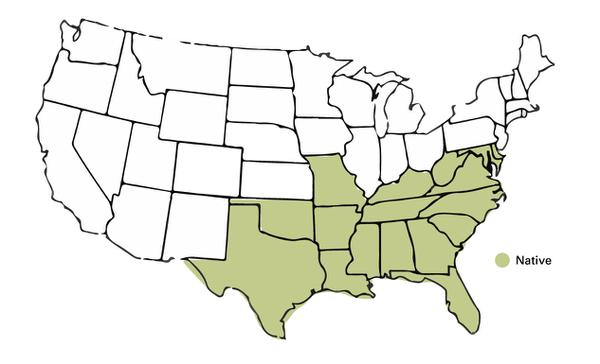 Figure 10: Diagram showing geographic range of muscadines.