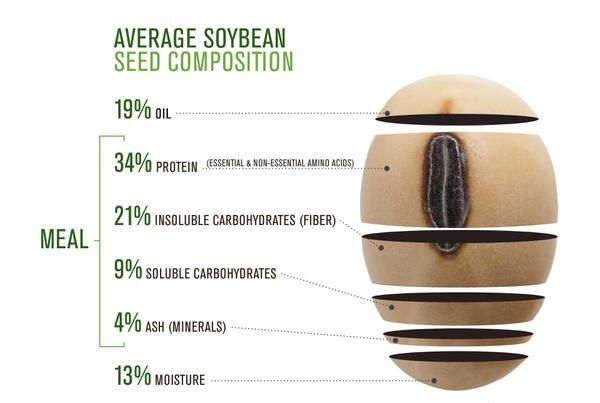 Thumbnail image for Soybean Facts