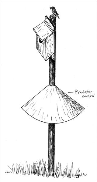 Figure 12. A properly designed nest box placed on a post above a