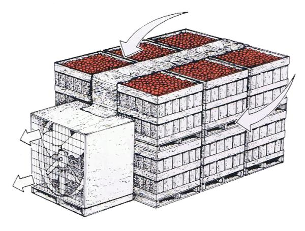 Figure 15. Apple crates being forced-air cooled.