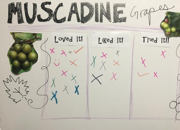 Figure 16. The bar graph made from this 4-H club loved muscadine