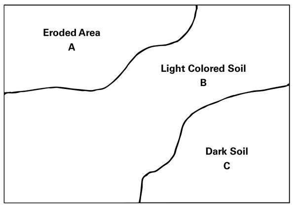 Figure 1. Within each field, collect a separate sample from each