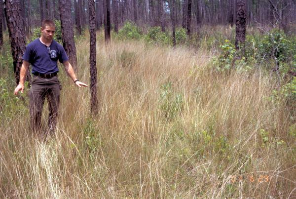 Figure 3. Prescribed fires promote lush growth of grasses and fo