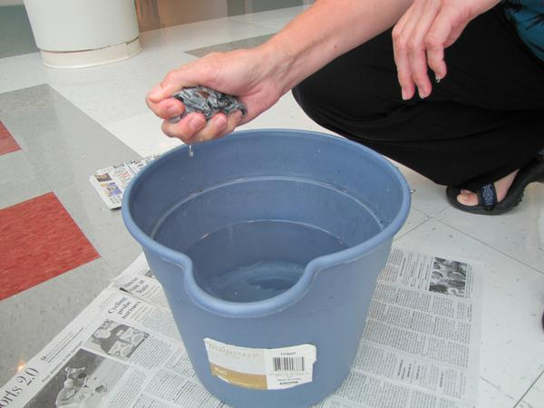 Figure 4. Soak bedding material in water for 5 to 10 minutes