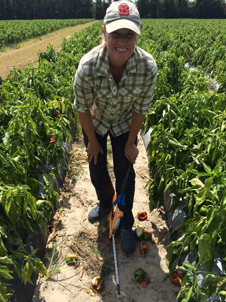 How to Determine the Potential to Increase Vegetable Yield