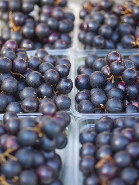 Figure 4: Fresh muscadines can be found in NC farmers markets