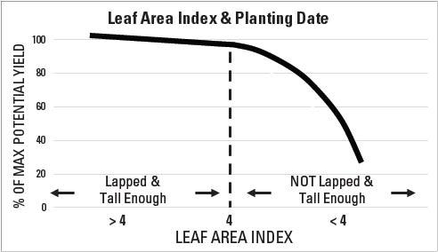 Figure 5-2. Relationship between Leaf Area Index (LAI) and plant