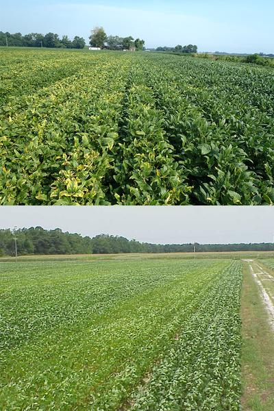 Figure 6-12. Streaks in soybean fields associated with patterns