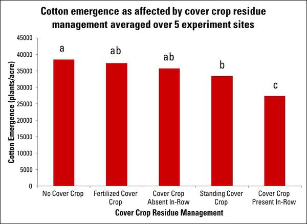Figure 7. Cotton emergence as affected by cover crop residue man