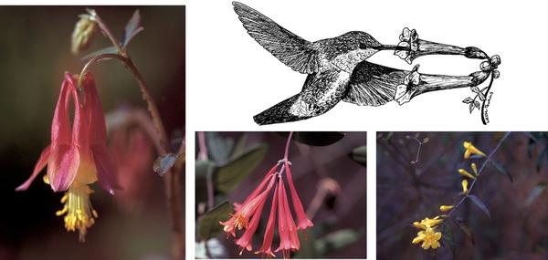 Figure 7. Ruby-throated hummingbirds are attracted to areas with