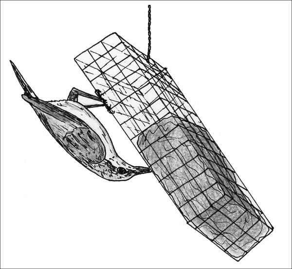 Figure 9. Suet feeders attract a variety of birds, including man