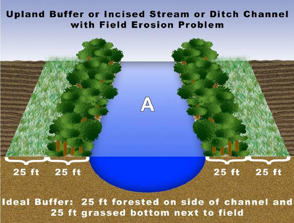 Figure A. Upland buffer or incised stream or ditch channel with