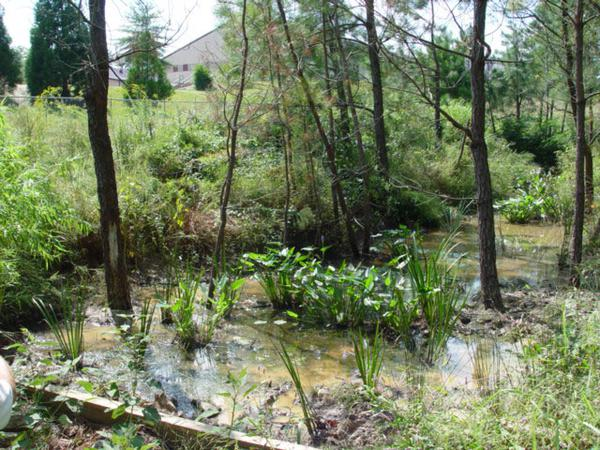 Photo of a wooded stormwater wetland