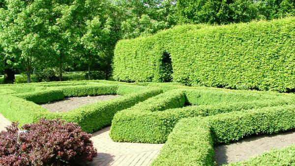 These hedges are shaped into large geometric designs