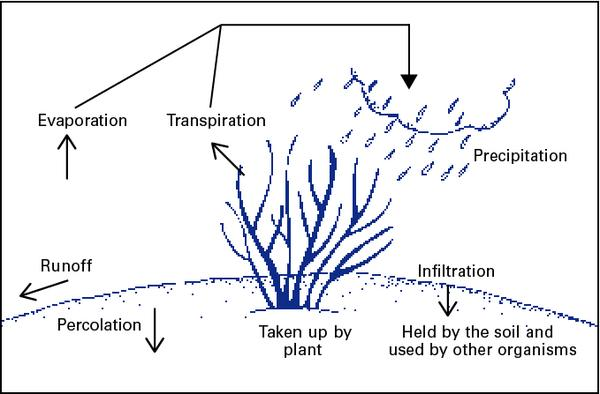 Illustration showing the water cycle
