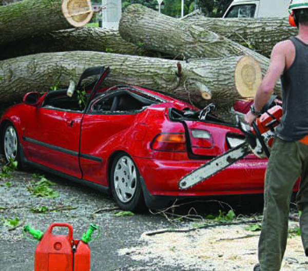 Tree care professional removing a large tree crushing a car.