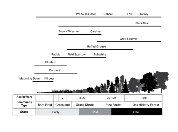 Illustration of forest stages and wildlife over time.