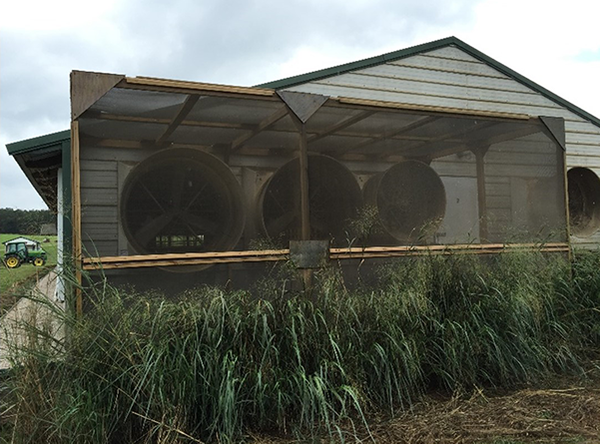 Thumbnail image for Reducing Odor and Dust Emissions from Fan-Ventilated Swine Barns with a Combined Engineered Windbreak Wall-Vegetative Strip System