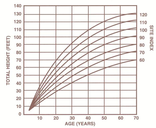 Figure 1. Site index curves for loblolly pine at index age 50 ye