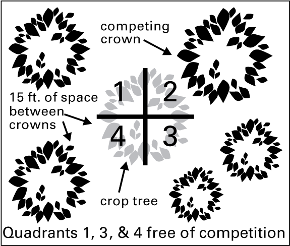 Illustration of crop tree quadrant system