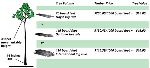 Timber sales a planning guide for landowners nc state for How to calculate board feet in a tree
