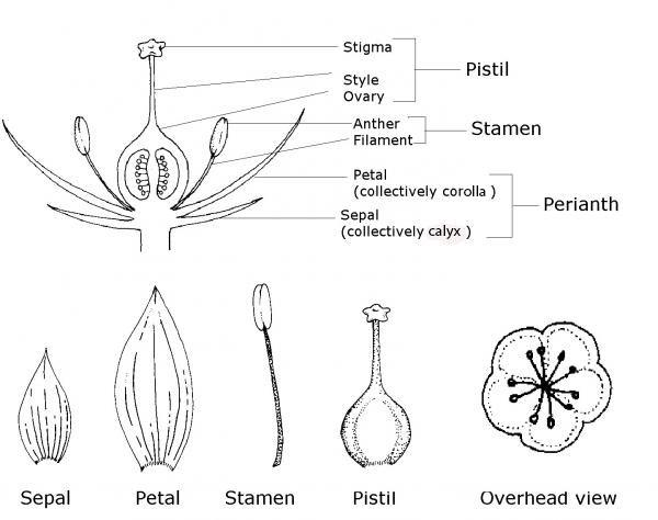Figure 3–40. Parts of a flower.