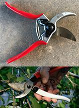 One type of bypass shears
