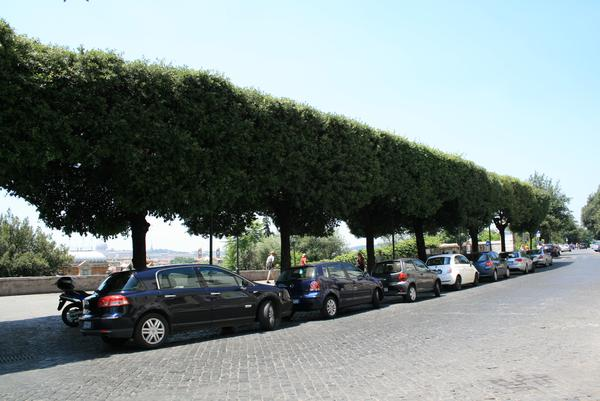 A line of pleached trees creates a border along a row of cars