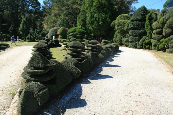 Intricate topiaries of many shapes line a walkway