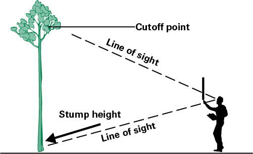 Measure merchantable height by looking up to the cutoff point