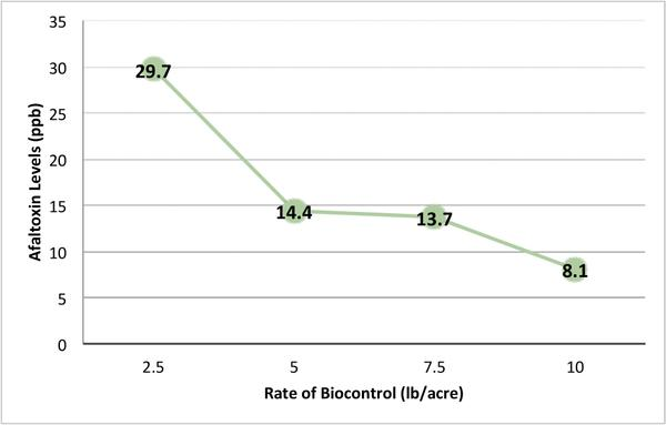 Aflatoxin concentrations in response to biocontrol application.