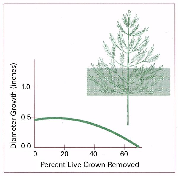 Graph showing impact of excessive pruning on tree growth