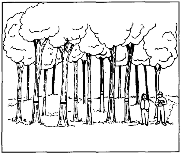 Illustration of trees with ribbons indicating which ones to cut