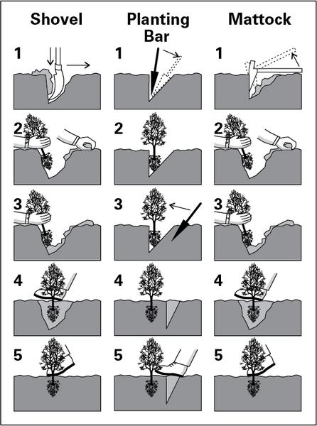Planting methods using a shovel, planting bar, or mattock