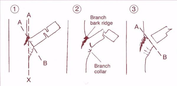 Illustration of the steps for natural-target pruning